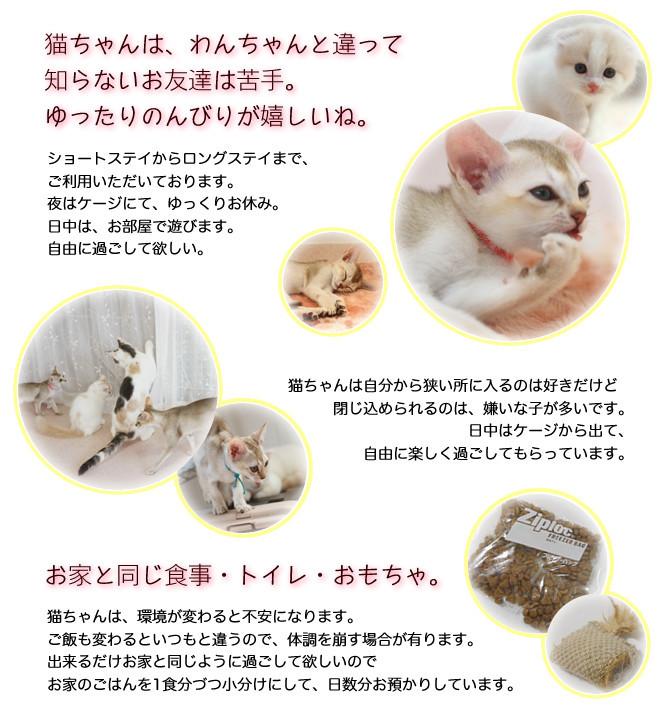 猫預かり-説明文-